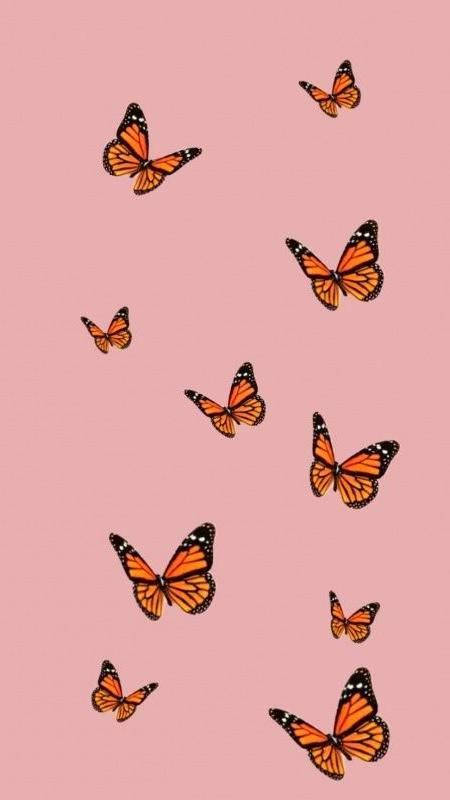 Butterfly Iphone Wallpaper Aesthetic